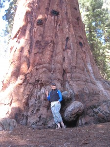 Holding a cone at the base of a Sequoia.