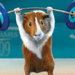guinea pig weight lifting