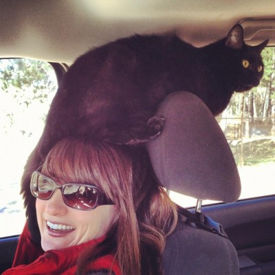 Please help me!!! I have a belligerent cat on my head!